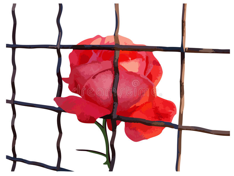 Rotrose hinter Gittern vektor abbildung