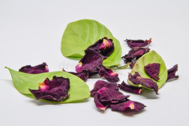 Die roten rosafarbenen Blumenblätter, die trocken sind und die grünen Blätter, die trocken sind, verwelkt stiegen Blumenblätter a lizenzfreie stockfotos