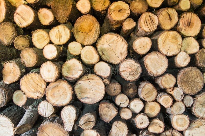 Die Rundschnitterlenklotz, die in der Lagerung gestapelt werden und bereiten für das Hacken des Holzfällers mit Axt auf Brennholz lizenzfreies stockfoto