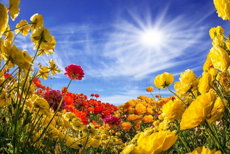 Die südliche warme Sonne stockbild