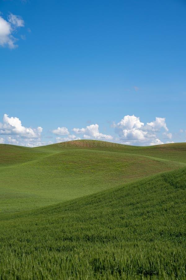 Die sanft grünen Hügel des Palouse-Ackerlandes östlich des Staates Washington stockbilder