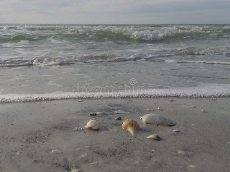 Die Schätze des Ozeans lizenzfreie stockfotos