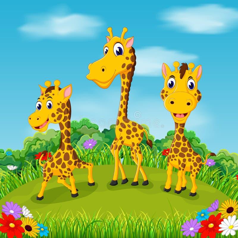 Die schöne Ansicht mit der Giraffe drei, die zusammen auf dem Gebiet geht stock abbildung