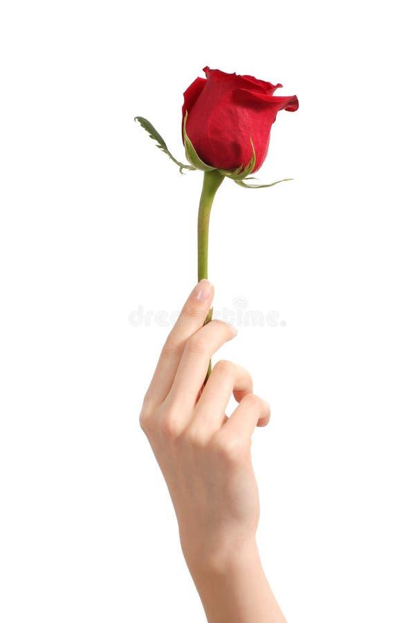 Schöne Frauenhand, die einen roten Rosebud hält lizenzfreie stockfotografie