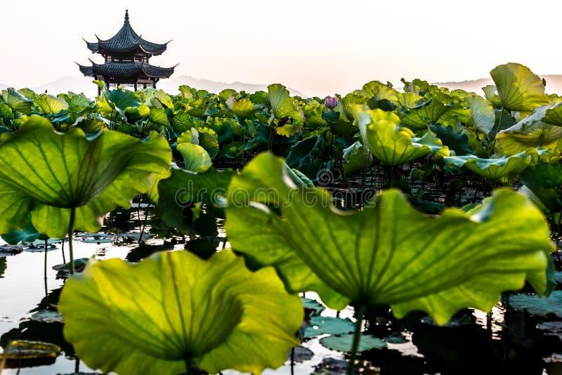 Die schöne Landschaftslandschaft von Xihu Westsee in Hangzhou CHINA lizenzfreie stockfotos