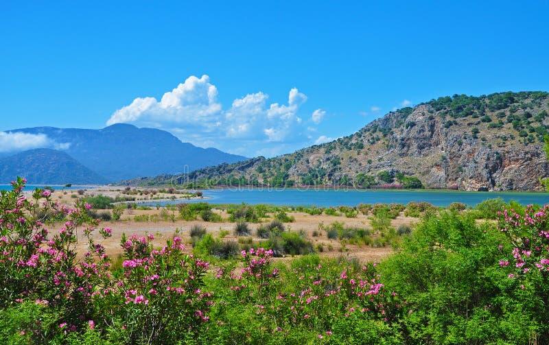 Die schöne türkische Landschaft - Meer, Berge und Blumen lizenzfreie stockfotos