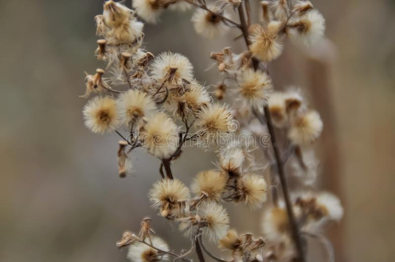 Die schönen Blumen stockfoto