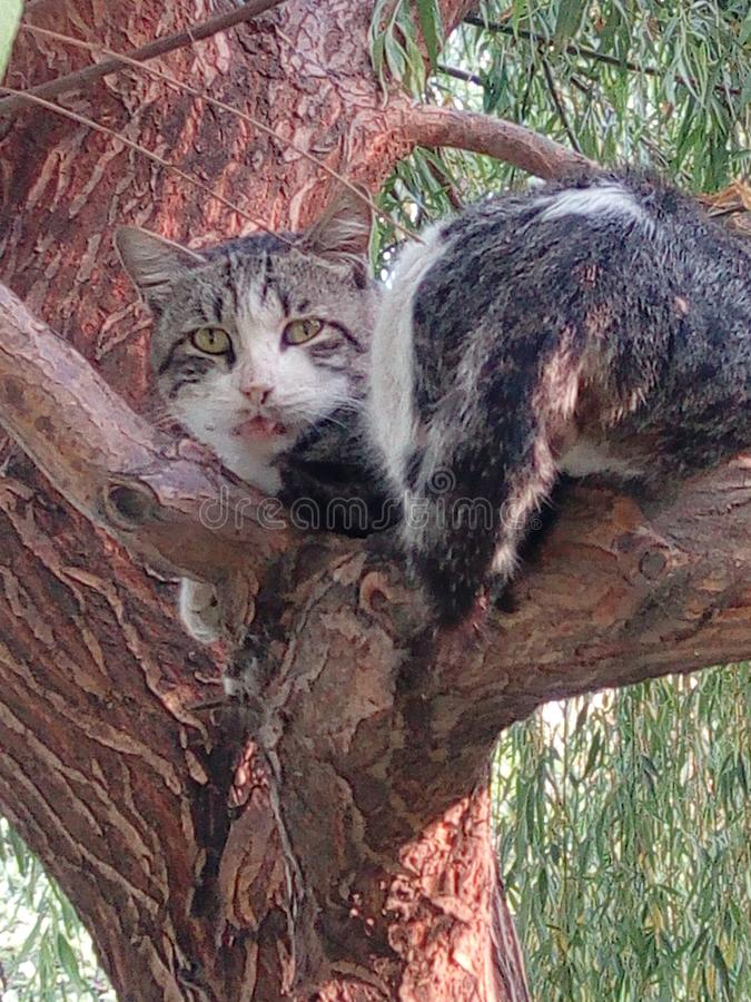 Die sch?nen Katzen des Baums werden ?berrascht lizenzfreies stockbild