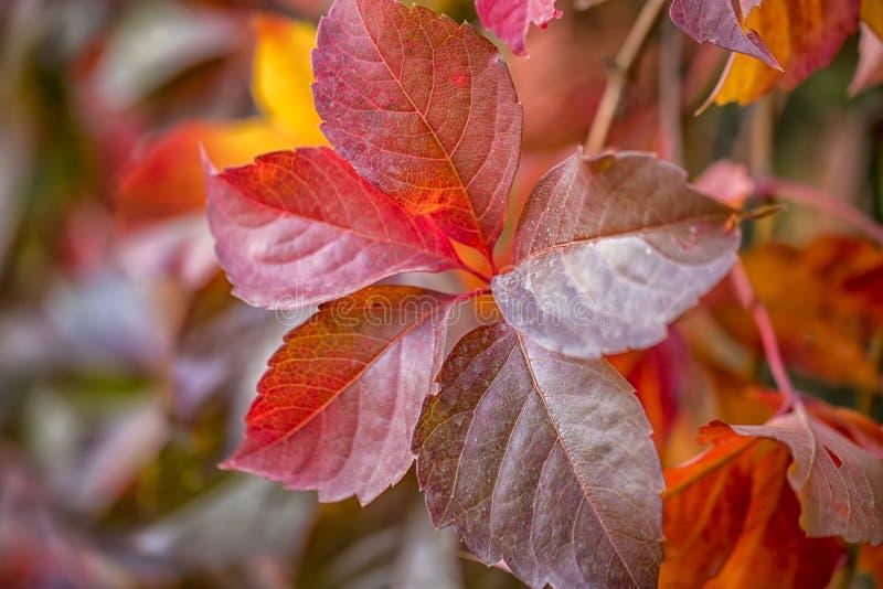 Die Schönheit von Herbstfarben stockbilder