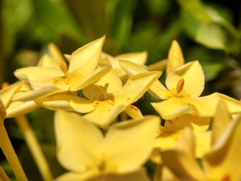 Die sch?ne gelbe Blume stockfotografie