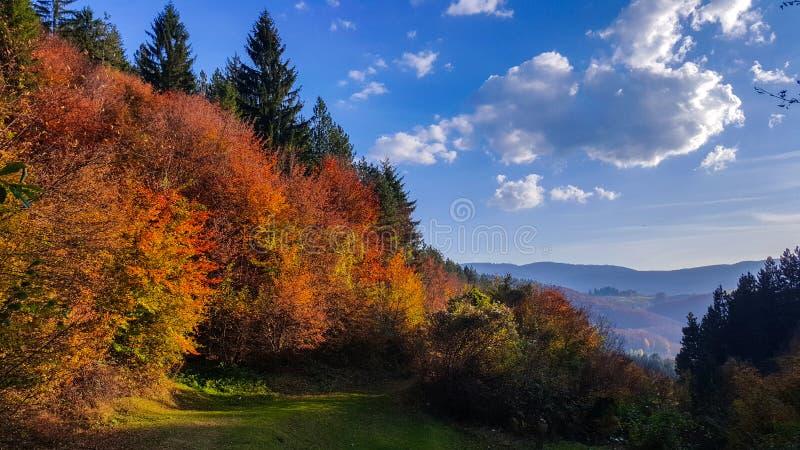 Die sch?ne Herbstlandschaft Oktober-Farben Die Sch?nheit von Herbstfarben von B?umen stockfotos