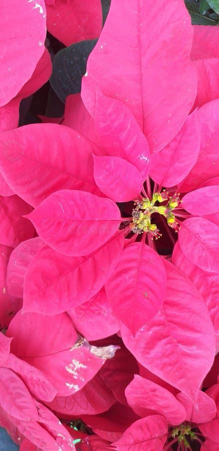Die sch?ne rosa Blume stockbild