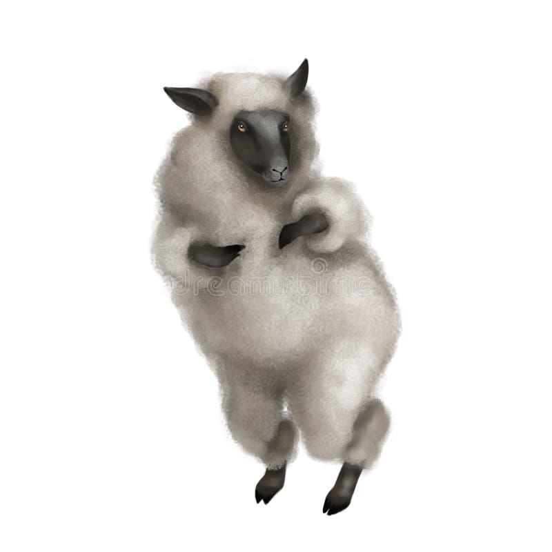 Die Schafe sind auf ihren Hinterbeinen Flaumiges graues Lamm Getrennt auf weißem Hintergrund stock abbildung