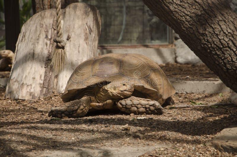 Die Schildkrötenlagen lizenzfreies stockbild