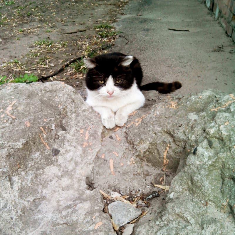 Die schlaue Katze stockbilder