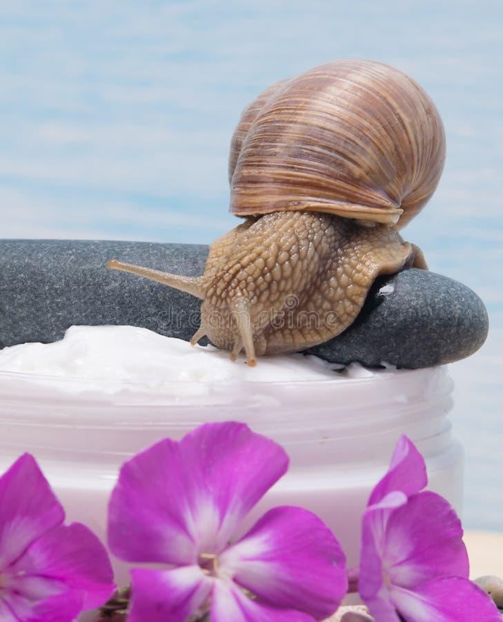 Die Schnecke kriecht entlang den Stein in Richtung der Creme, mit dem Geruch von Blumen stockfotos