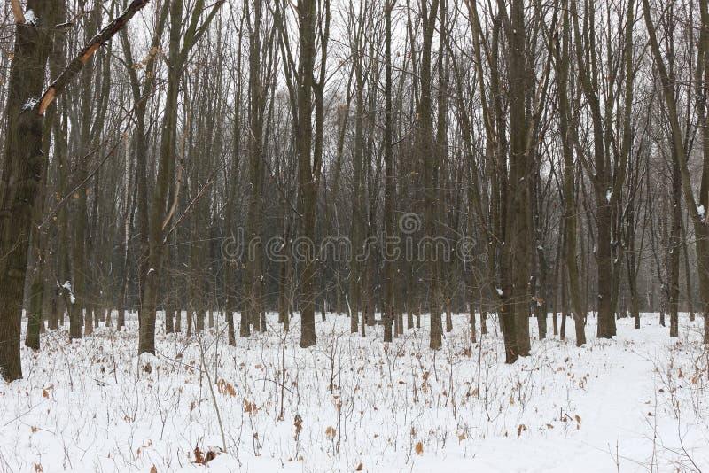 Die Schwarzweiss-Töne des Winterwaldes beruhigen und helfen zu hören, um zum Schweigen zu bringen lizenzfreies stockbild