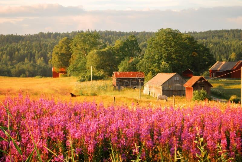 Die schwedische ländliche Landschaft lizenzfreie stockfotos