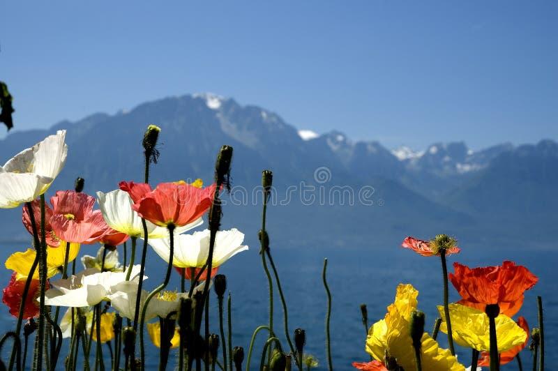 Die Schweiz-Berge lizenzfreies stockbild