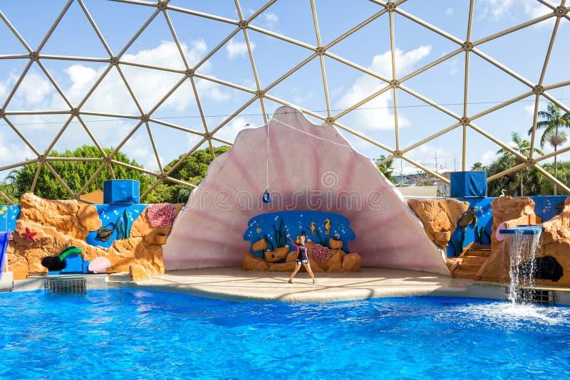 Die Seelöweeinschließung im Miami Seaquarium stockbild
