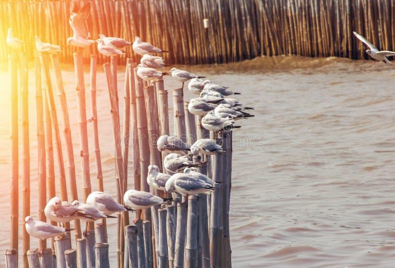 Die Seemöwe sind auf dem Stumpf auf dem Meer stockbild