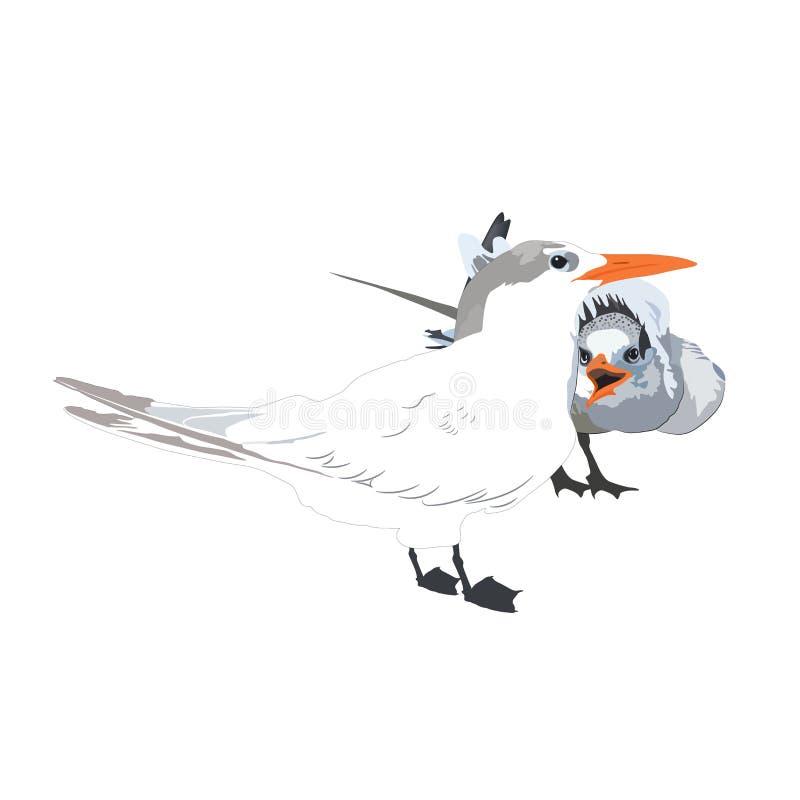 Die Seemöwen Eine Zeichnung einer Möve und ihres Kükens auf einem weißen backg lizenzfreies stockbild