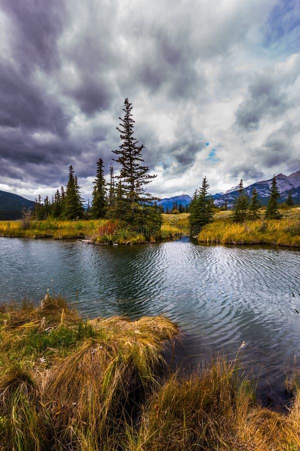 Die Seen, gelbe das Herbstgras und die Tannen lizenzfreie stockfotos