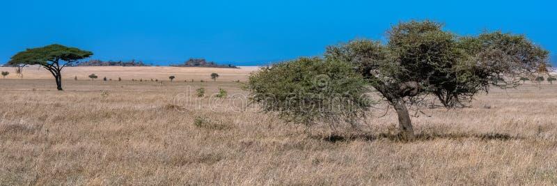 Die Serengeti-Ebenen, Panorama stockfoto