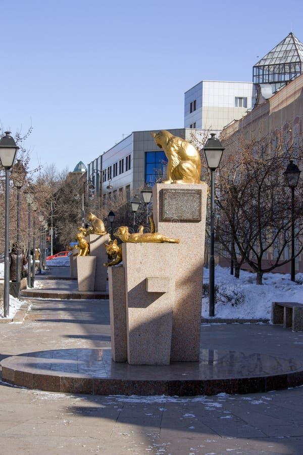 Die sibirischen Katzen quadratisches Tyumen, am 18. März 2016 lizenzfreie stockbilder