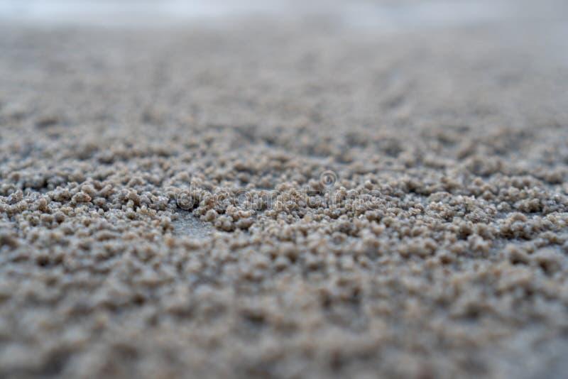 Die sich hin- und herbewegende Nut des Lebensraums Horn-?ugiger des Geist Krabbe oder Ocypode auf dem wei?en Sand durch das Meer lizenzfreie stockfotos