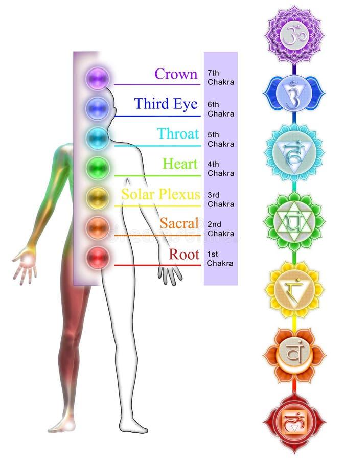 Die sieben Chakras vektor abbildung
