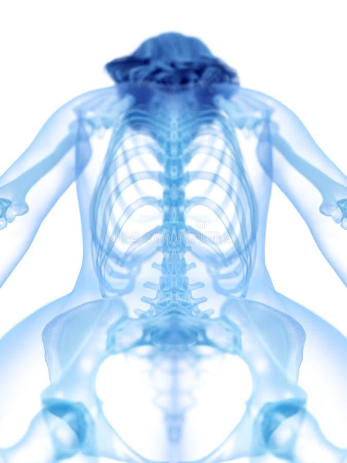 Die skelettartige R?ckseite lizenzfreie abbildung
