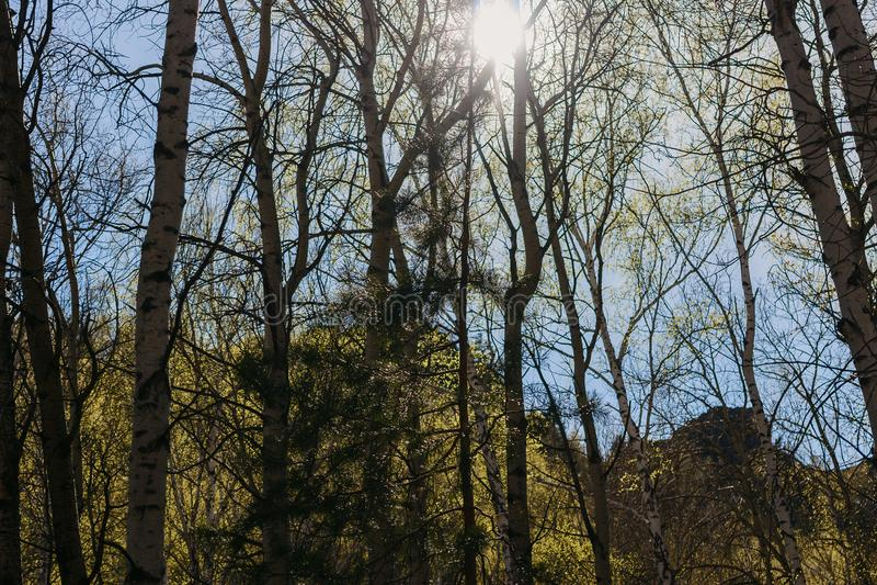 Die Sonne blickt durch die Bäume flüchtig stockfotos