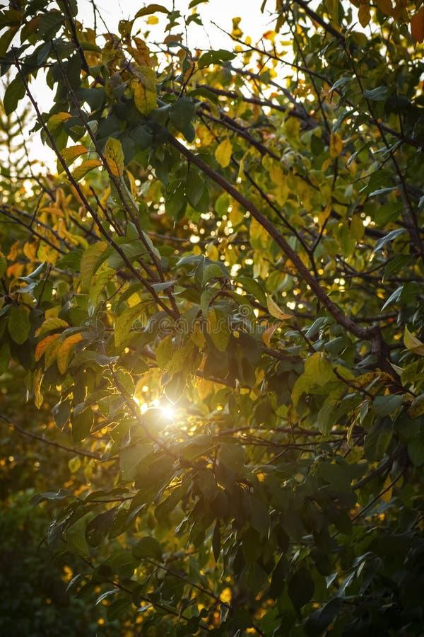 Die Sonne bricht durch das Laub lizenzfreies stockbild