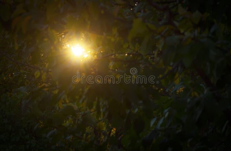 Die Sonne bricht durch das Laub stockfotos