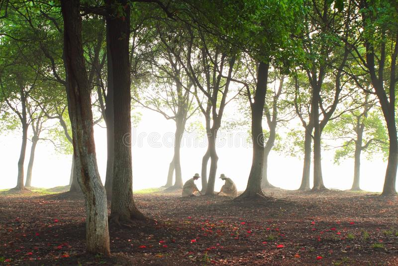 die Sonne durch das Holz lizenzfreie stockfotos