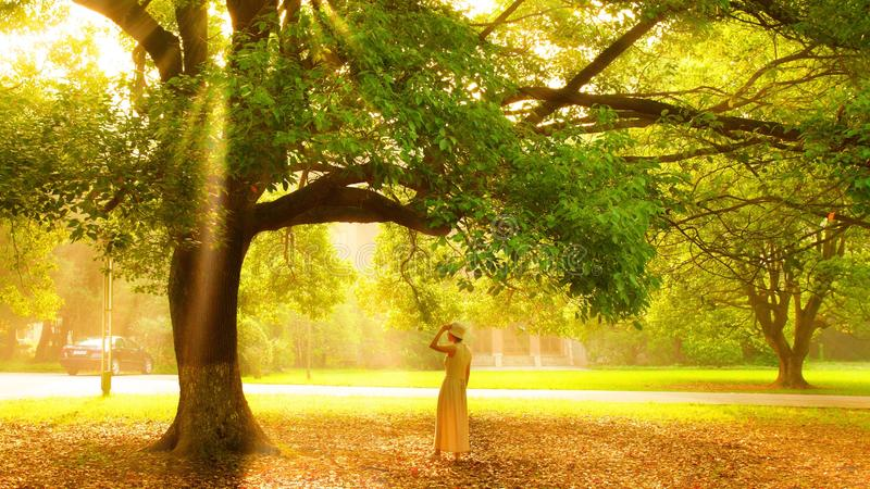 die Sonne durch den Wald stockbilder