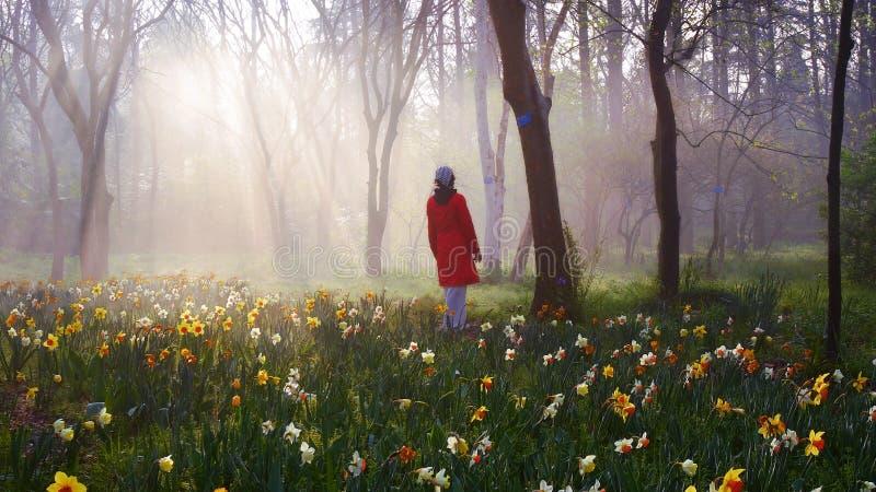 die Sonne durch den Wald lizenzfreie stockfotografie
