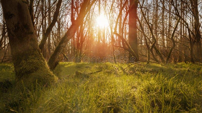 Die Sonne erleuchtet die Natur lizenzfreie stockfotografie