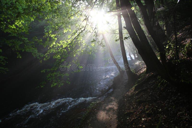 Die Sonne ` s Strahlen belichten die dunkle Schlucht stockfotografie