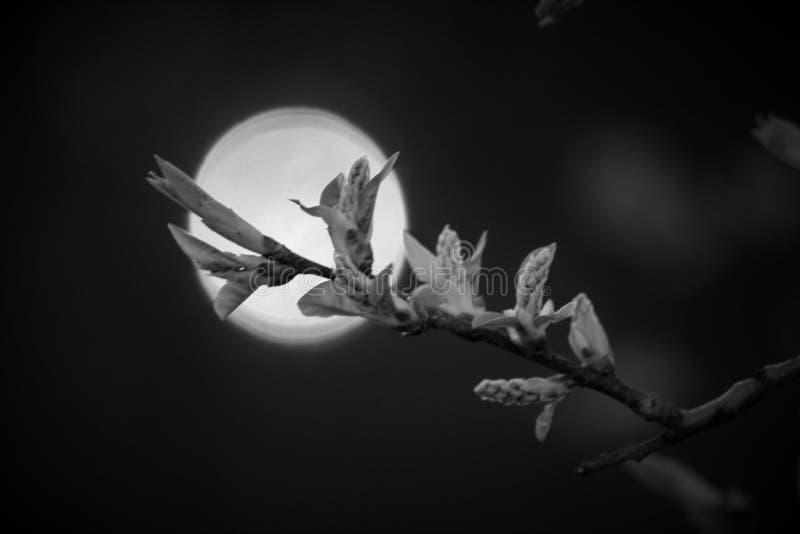 Die Sonne und der Kirschbaum lizenzfreies stockfoto