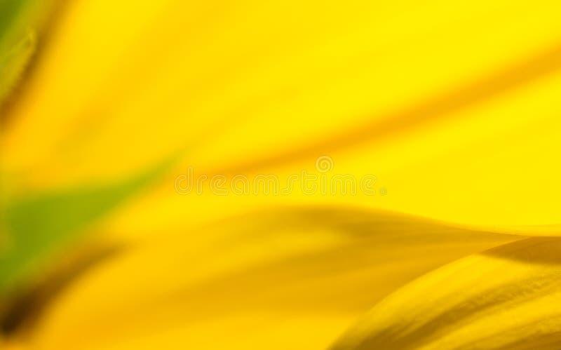Die Sonnenblume im Makro, Blattmuster stockbild