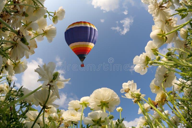 Die Sonnenblume und die Butterblumeen stockfotografie