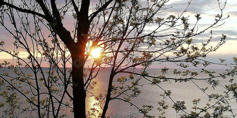 Die Sonneneinstellung über dem Meer durch die openwork Niederlassungen und die Blätter von Bäumen Sch?ner nat?rlicher Hintergrund stockbild
