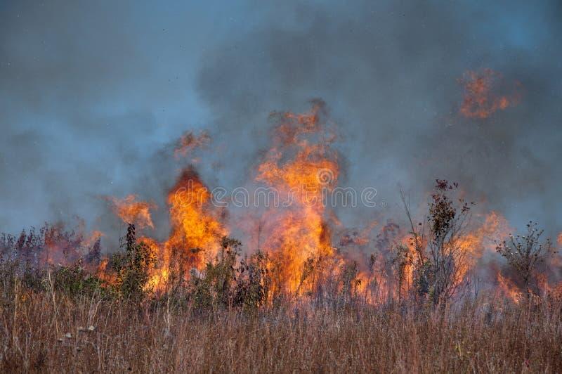 Die Steppenbrände stockfoto
