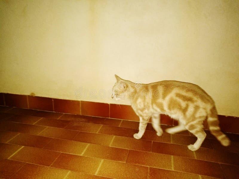 Die stille Katze des Freunds stockbild