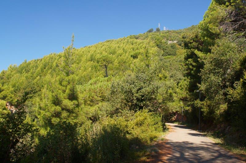 Die Straße aufwärts durch einen Kiefernwald lizenzfreie stockfotos