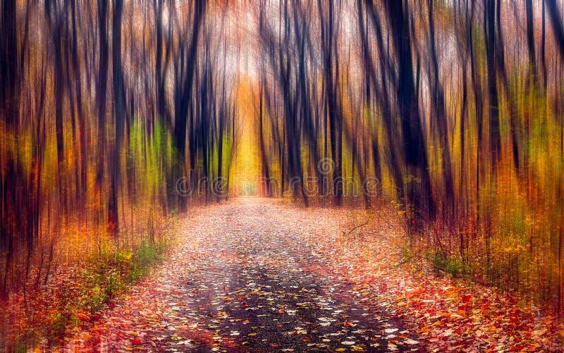 Die Straße durch den magischen Wald stockbilder