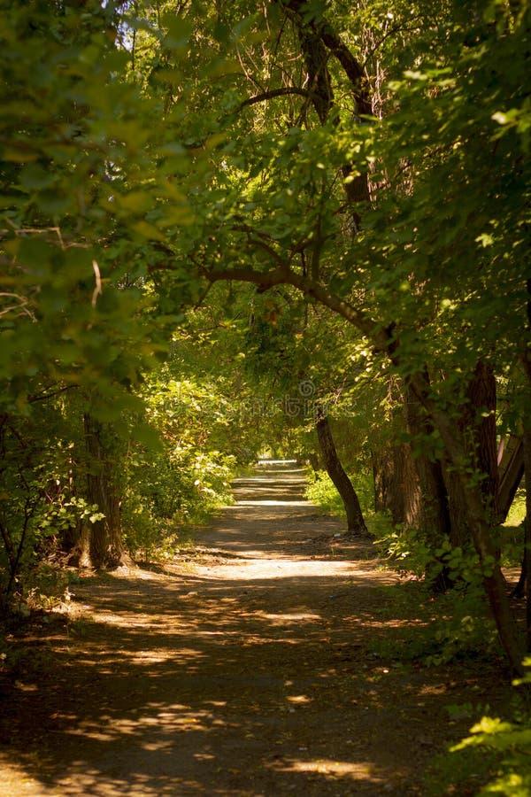 die Straße in einem schönen Sommerwald lizenzfreie stockbilder