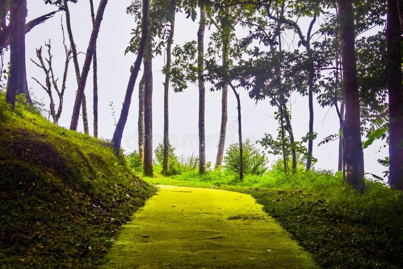 Die Straße im Wald während der Regenzeit hat hohe Feuchtigkeit zur Veranlassung des Mooses, voll zu sein, der Bäume und des Nebel lizenzfreies stockfoto